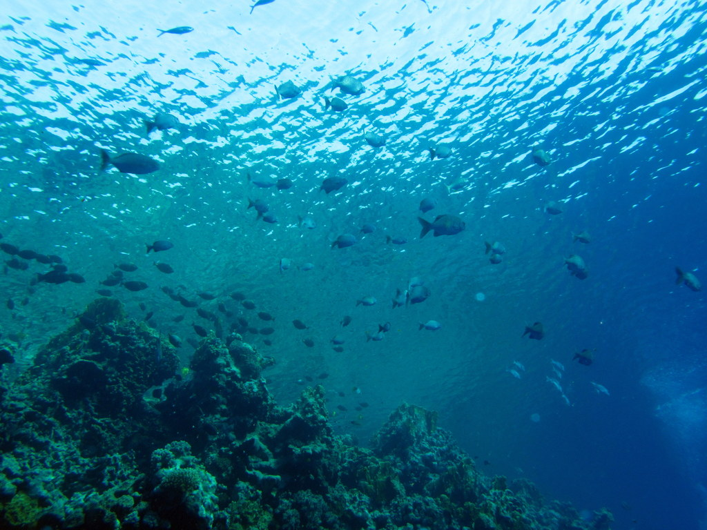 400px][https://commons.wikimedia.org/wiki/File:Transparent_water_%286165868031%29.jpg source : https://commons.wikimedia.org/wiki/File:Transparent_water_%286165868031%29.jpg