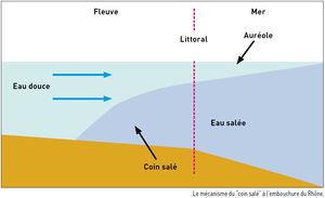 densite de l eau sale